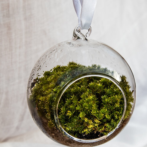 Tardigrade habitat (moss terrarium)
