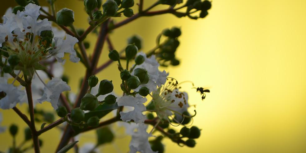 Creating a bee-friendly garden