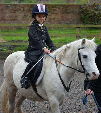 Pony Taster Session Photo