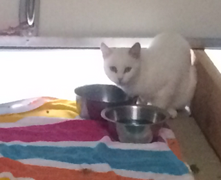 How a little white cat reminded me about trust, in life and marketing!