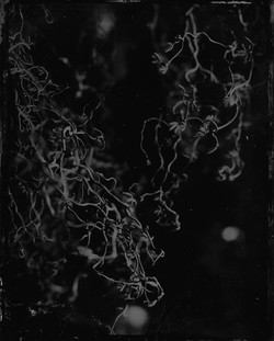 © Sophie Chalk