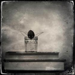 © Emily Whiting
