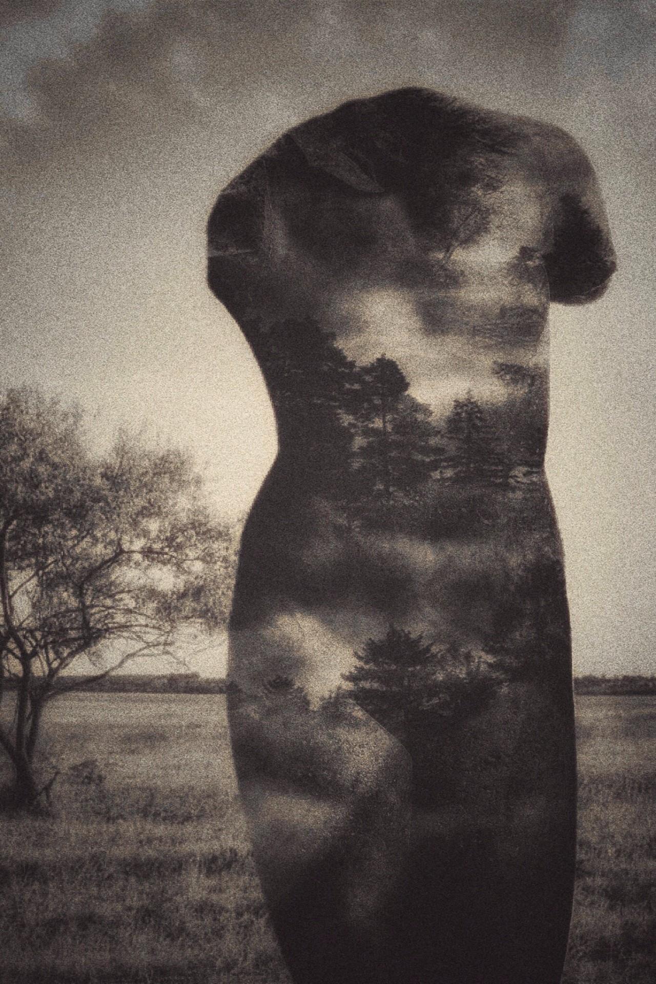 © Donna Dangott