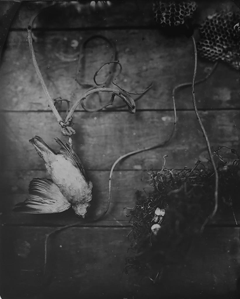 © Julie Hamel