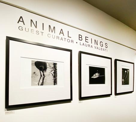 ANIMAL BEINGS • DOCUMENTATION