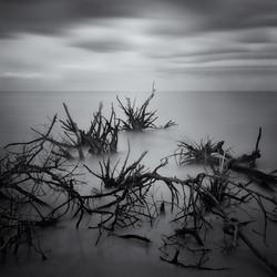 © Scott Bolendz