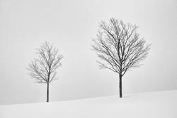 © Erik Gehring