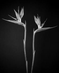 © Simone Madeo