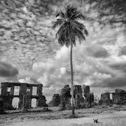 © Demetrio Jereissati