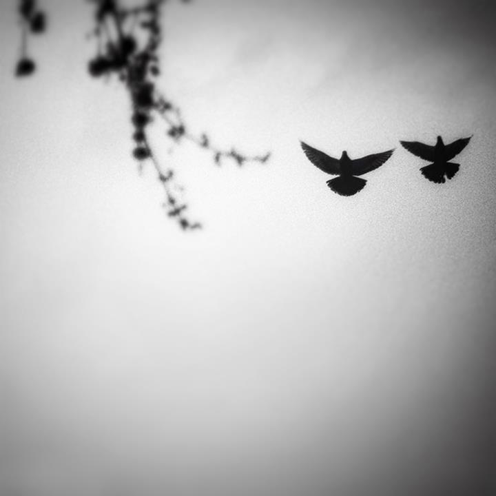 © Karey Walter