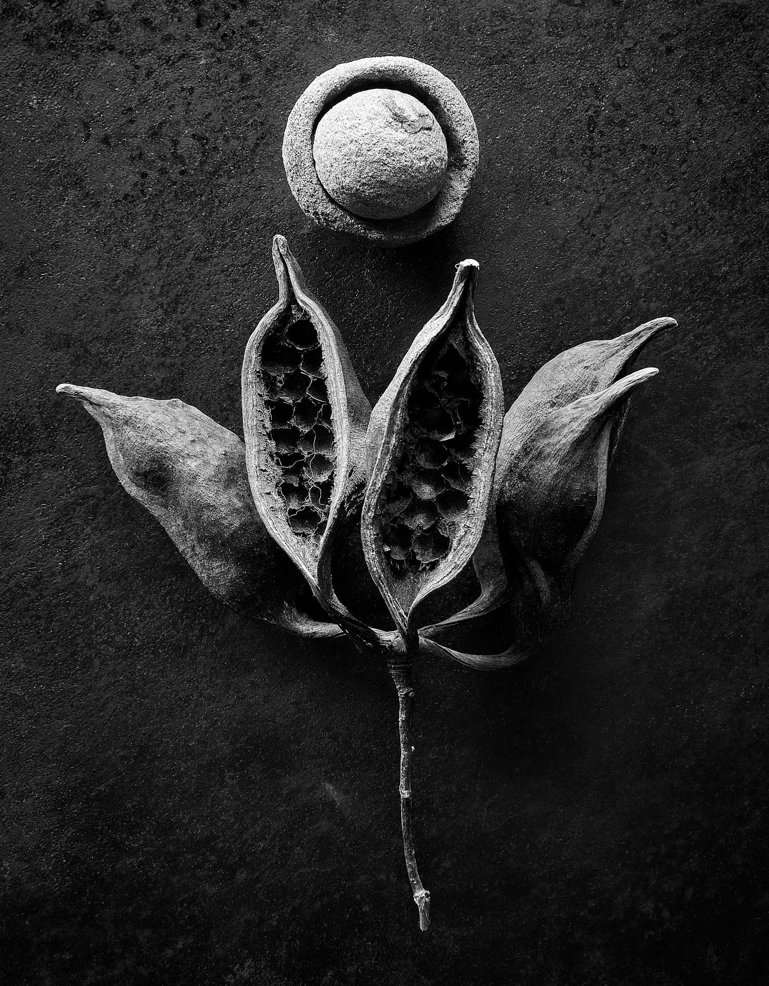 © David Moore
