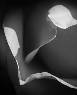 © Avery Edelman