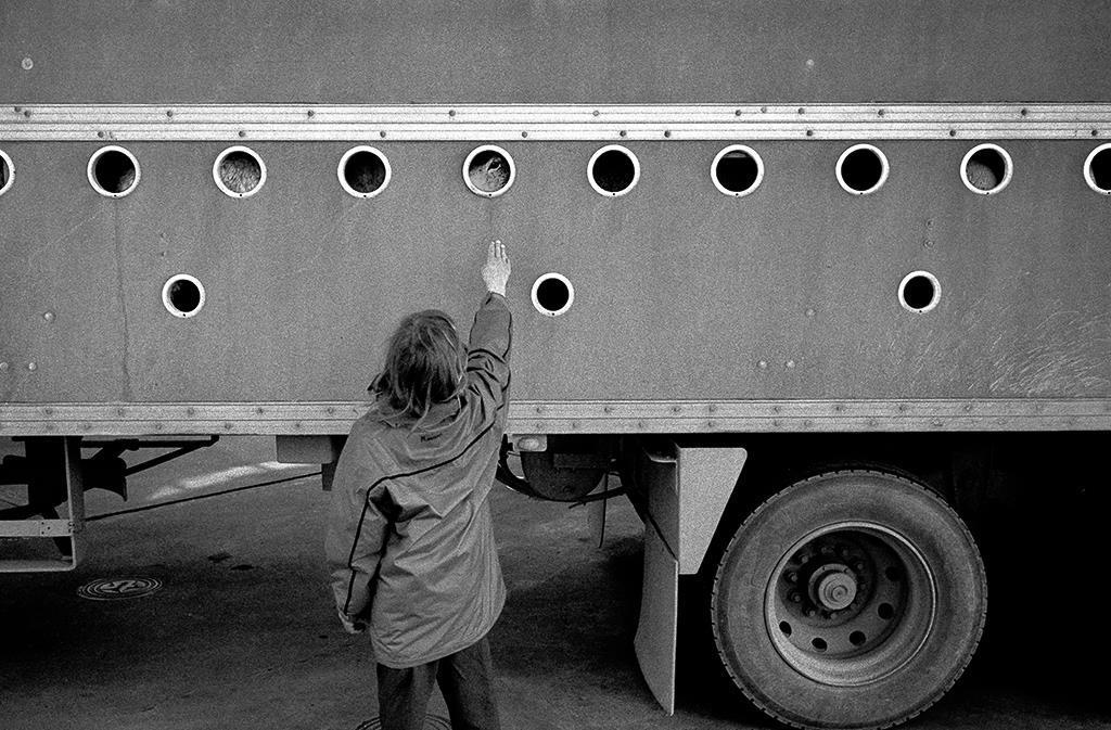 © Brian Condron