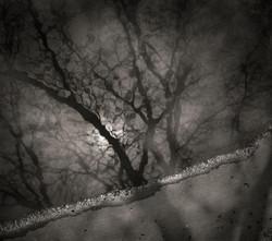 © Rowene Weems