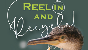 Reel In and Recycle: New fishing line recycling program is launched in QAC