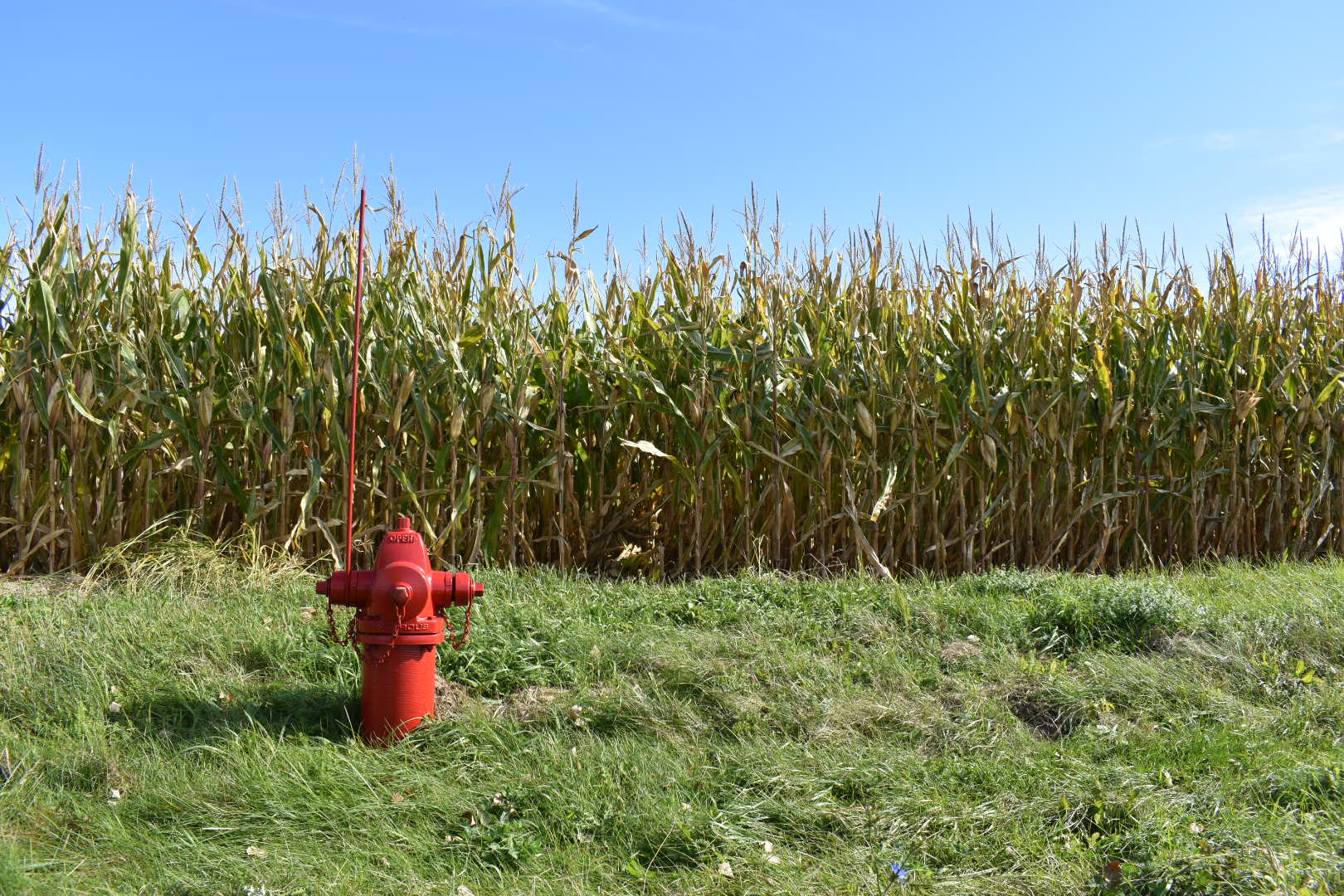 Fall 2019_Red fire hydrant