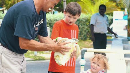 Cayman Turtle Centre - Turtle Encounters