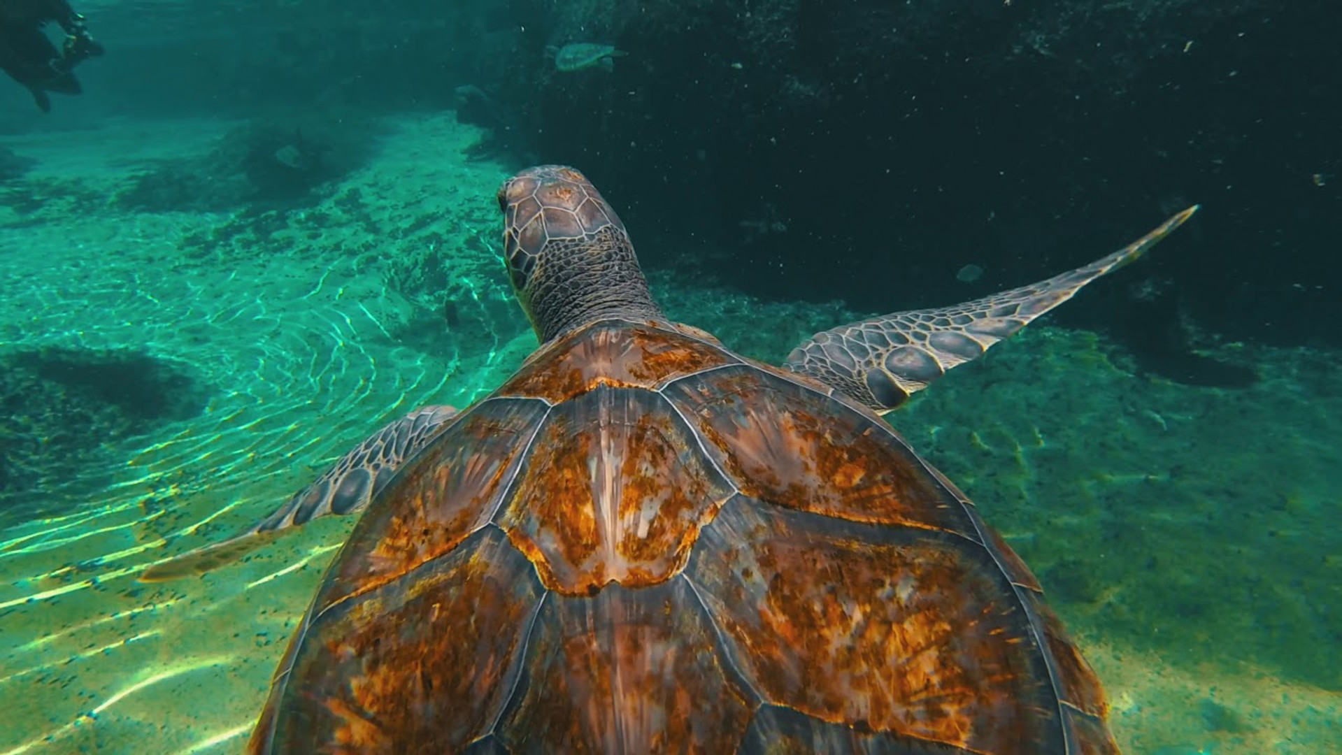 Cayman Turtle Centre - Exhibits & Natural Attractions