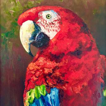 Macaw #2