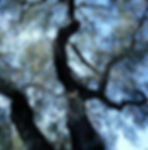 Tree Care 1.jpg