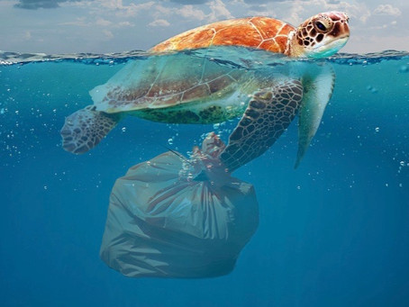 Eating, Drinking, and Breathing Plastic