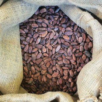 Unroasted Cocoa Beans