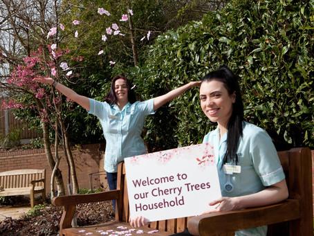 Cherry Trees Blossom At Radbrook
