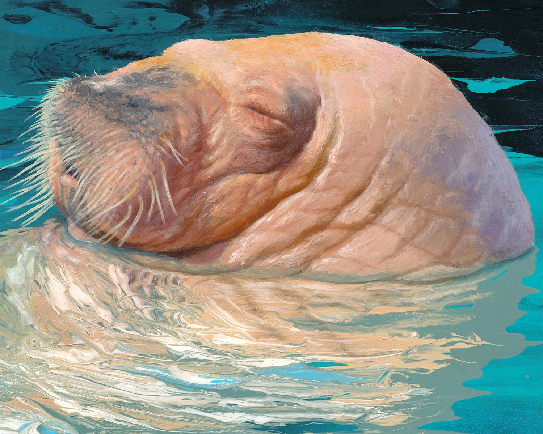 walrus 03