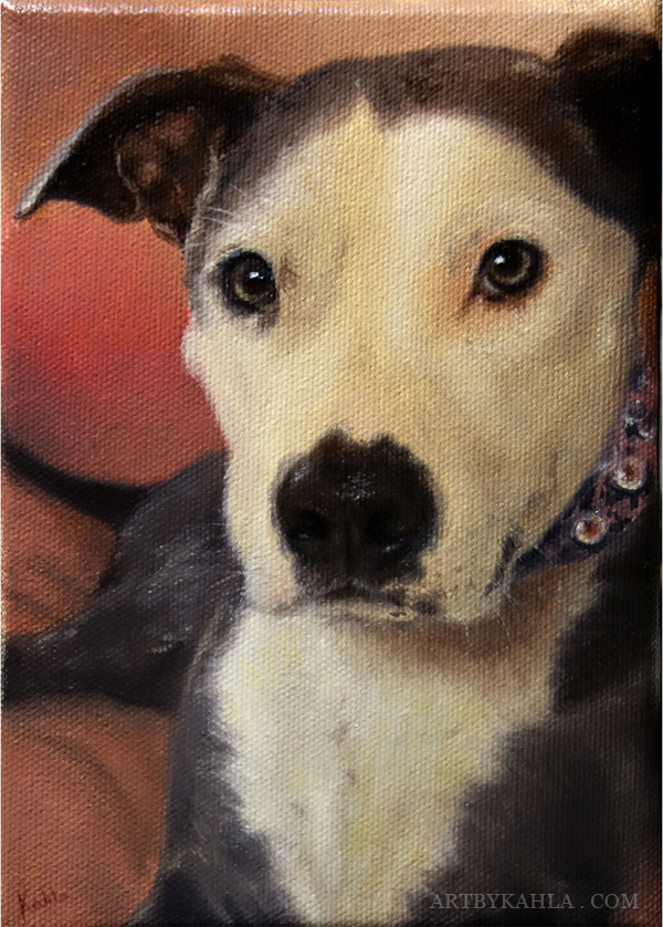 pit bull oil painting