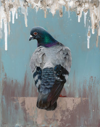 Pigeon Oil Painting