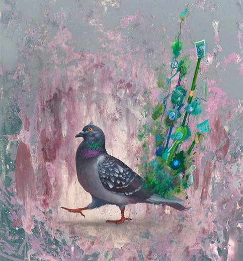 peacock pigeon
