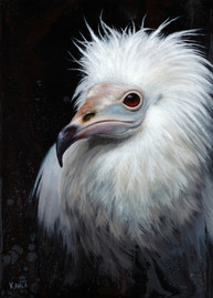 Egyptian Vulture oil painting