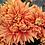 Thumbnail: Хризантема домашняя  Пантин бронз