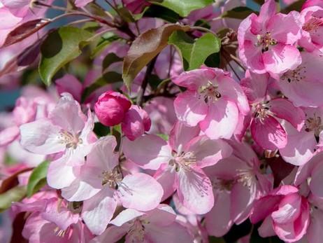 Препараты для весенней обработки сада