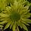 Thumbnail: Кустовая хризантема Greenlizard. № к.4