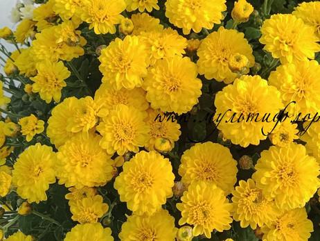 Цветы почтой