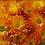 Thumbnail: Хризантема мультифлора Braga bronze