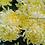 Thumbnail: Хризантема домашняя Angelys jaune