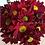 Thumbnail: Красная крупная ромашка Moretti