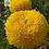 Thumbnail: Хризантема крупноцветковая Creamish gold (весна 2021)