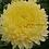 Thumbnail: Хризантема крупноцветковая Creamish white