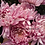 Thumbnail: Одноголовая хризантема Allouise pink (о.3)