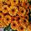 Thumbnail: Кустовая хризантема Blink Elisa Orange