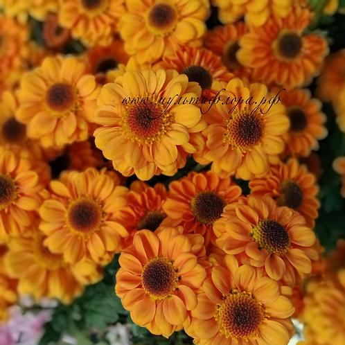 Кустовая хризантема Blink Elisa Orange