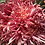 Thumbnail: Горшечная хризантема Schang