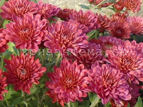 мультифлора Sanbeam color(весна 2021 г)