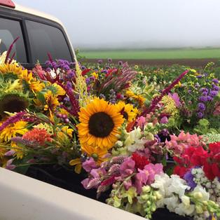 FlowersInTruck.jpg