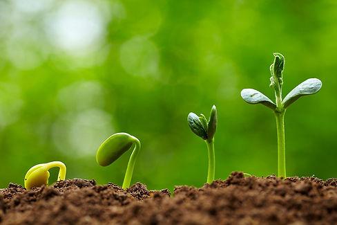 preparing-seedlings-1200x800.jpg