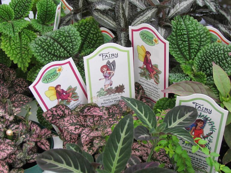 1394770328-fairy-garden-plants.JPG