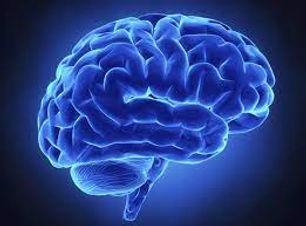 cerebros.jpeg